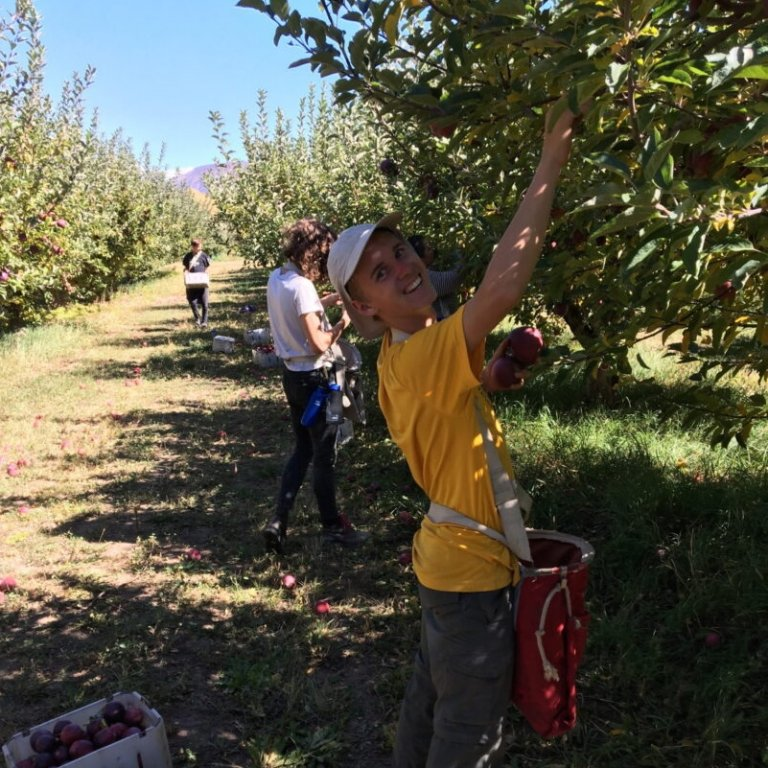 Young man smiling while picking apples